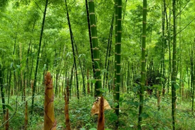 Perú recibe aporte de 6 millones de euros para programa forestal